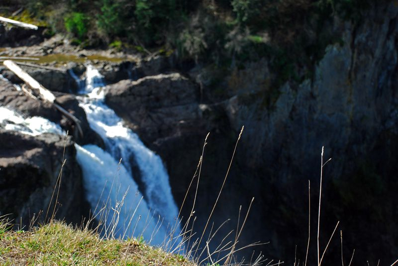 Snoqualmie falls weeds
