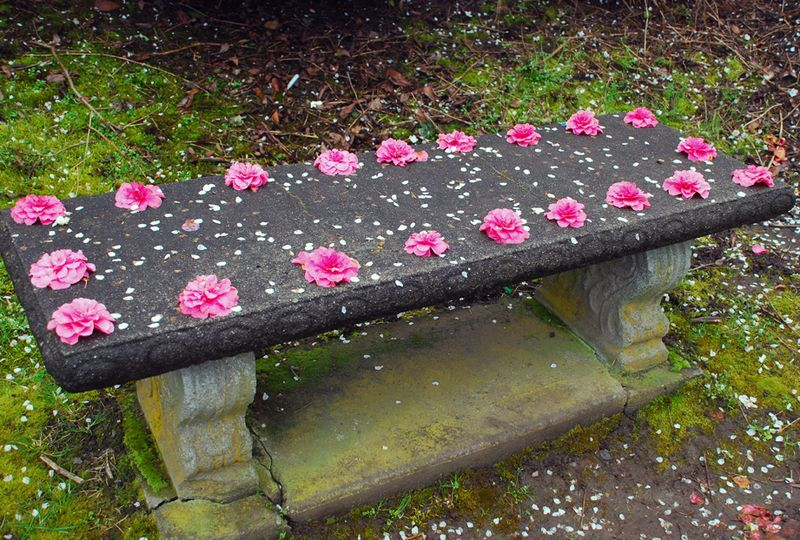 Flowers on bench