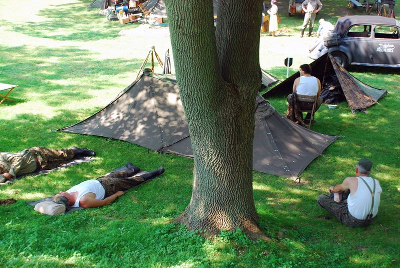 Sleeping around tree