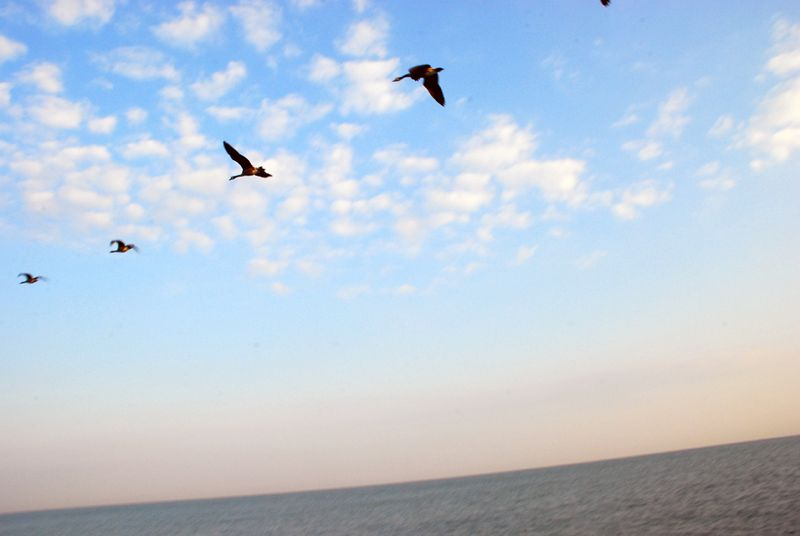 Birds over lake erie