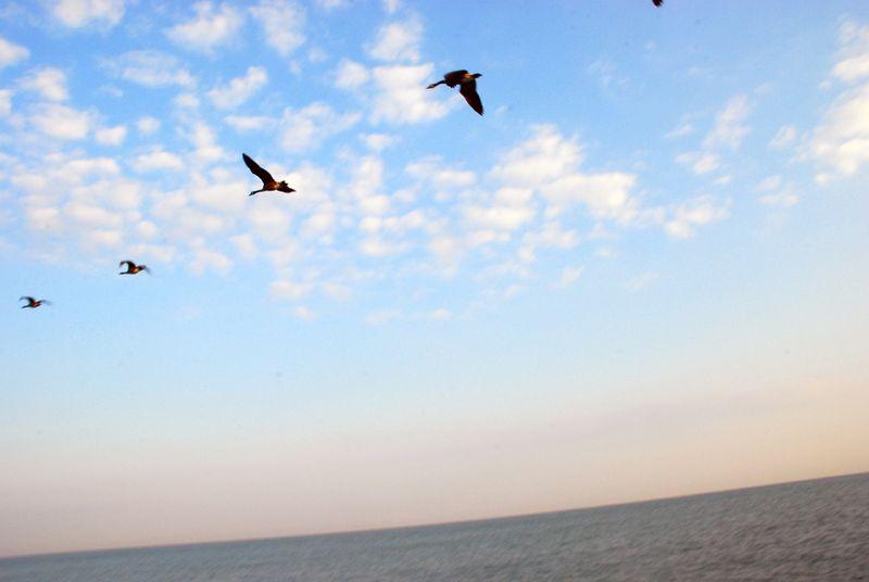 Birds over lake erie