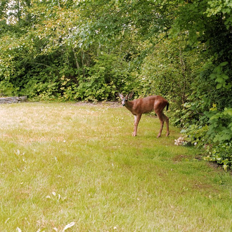Deer 2 web