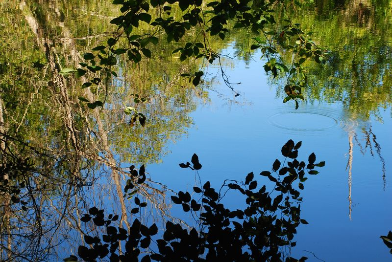 Reflection and ripple bloedel