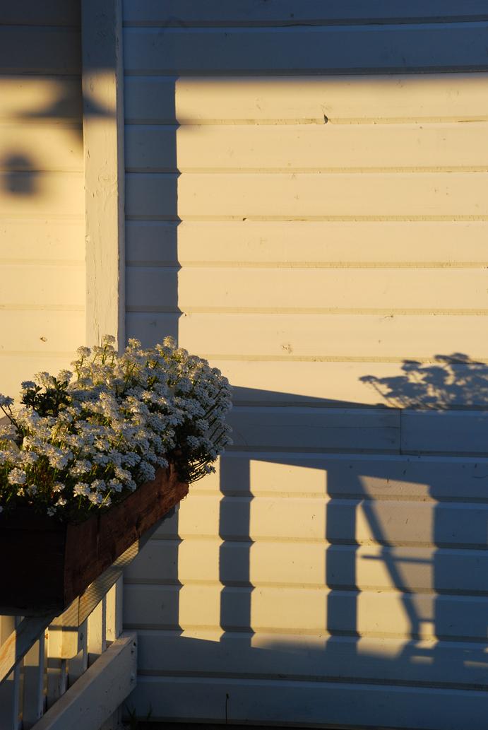 Bair flowers