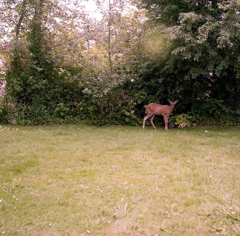 Deer web