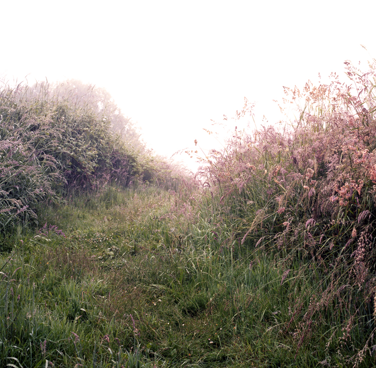 Path to field in fog web